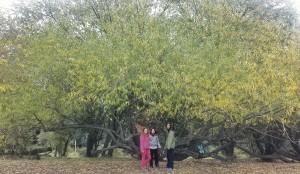 pic-nic-sous-un-arbre